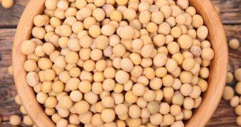 alimentos à base de soja